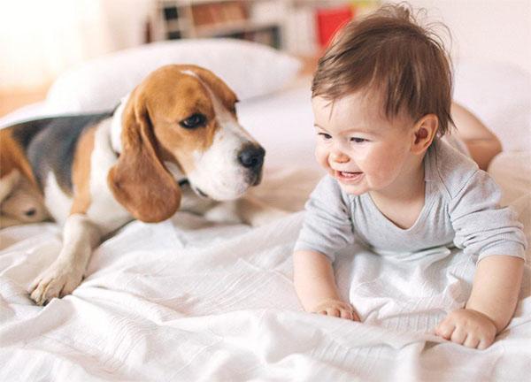 bebe jugando con su mascota